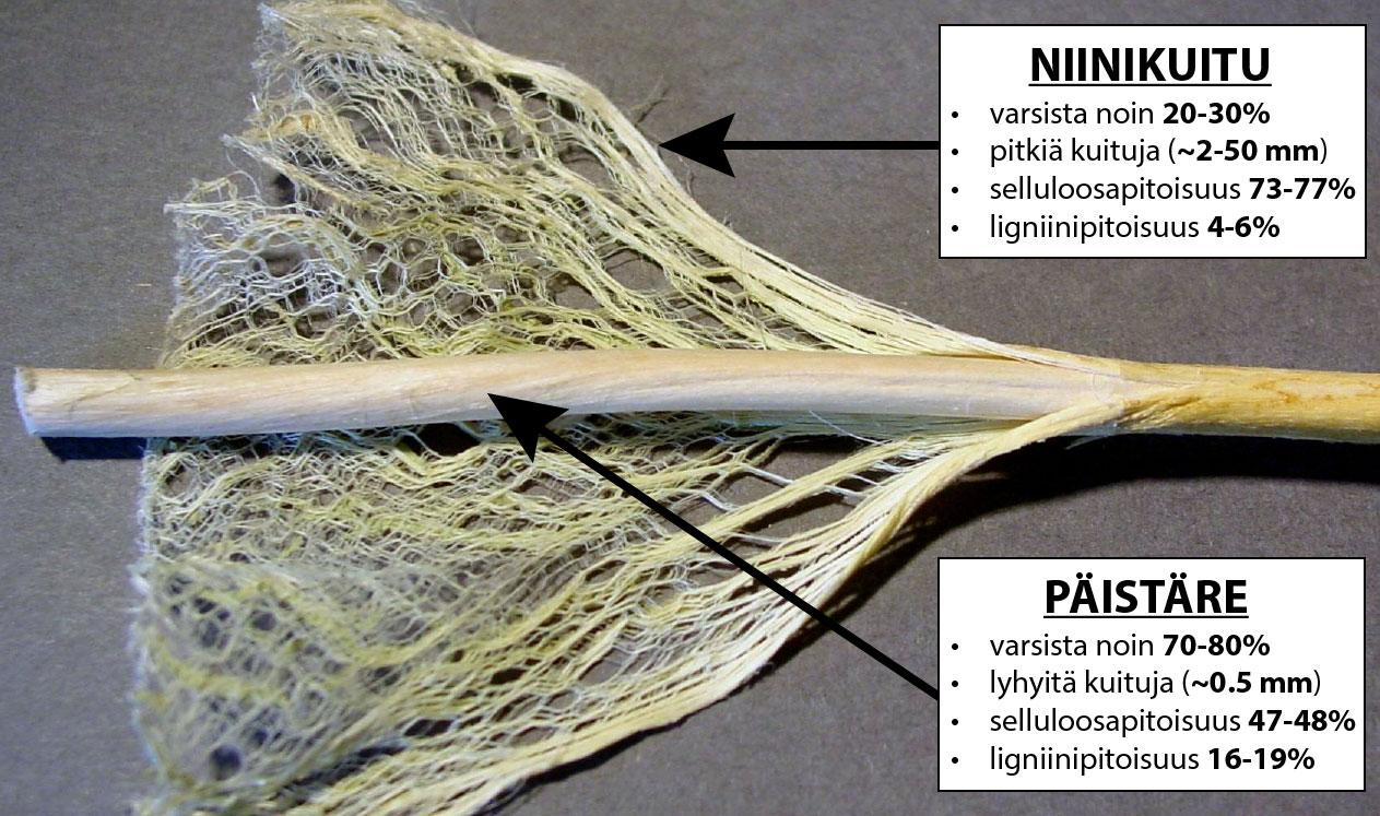 kuituhamppu niinikuitu ja päistäre
