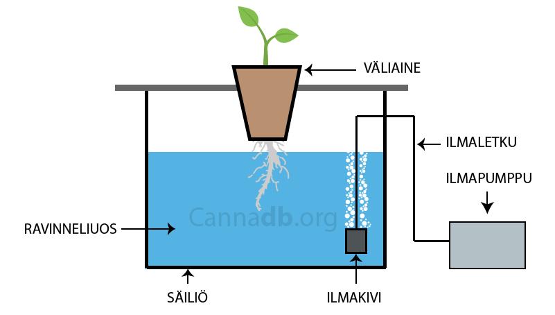 deep-water-culture-hydro-vesiviljely